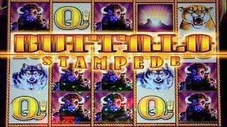 BUFFALO STAMPEDE Slot Machine BIG WIN BONUS and Nice Line Hit by Aristocrat