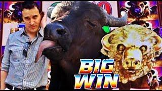 • BUFFALO LOVES ME! •  BUFFALO GOLD slot machine SUPER BIG WINS!