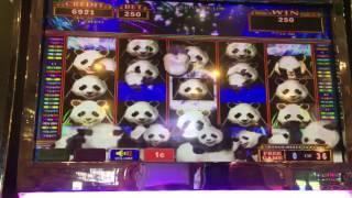 Panda Stacked Feature•LIVE PLAY w/Bonuses• Slot Machine at Flamingo Las Vegas
