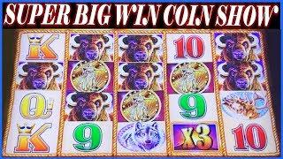 • SUPER BIG WIN BUFFALO GOLD • COIN SHOW 26 SPINS •️ SLOT MACHINE •️