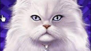 $30 Bet High Limit IGT Kitty Glitter slot machine  (litter) Live play