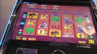 wild chuco and big red live play both bonus