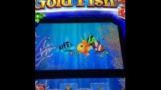 Gold Fish Slots Max Bet Big Win - image 6