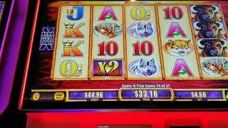 BIG WIN Buffalo Gold Spinning Fortunes Minor + Free Spins