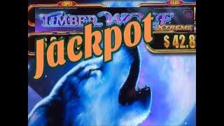 •JACKPOT !! FIRST JACKPOT (HANDPAY) ON YOUTUBE •TIMBER WOLF XTREME Slot / Revenge Complete •彡栗