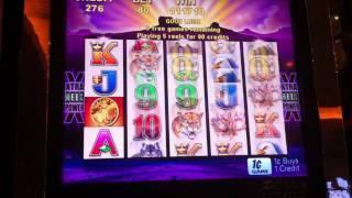 Aristocrat Buffalo MEGA Slot Win - Parx Casino - Bensalem, PA