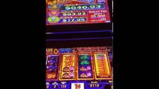 Cats and Dogs Video Slot Machine Smaller Progressive but Fun!