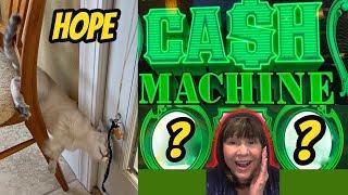CASH MACHINE WINS & HOPE OUR KITTEN