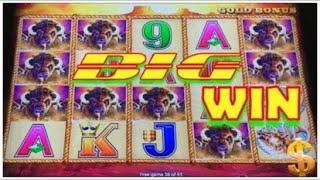 BIG WIN SO MANY BUFFALO HEADS! BUFFALO GOLD SLOT MACHINE COIN SHOW