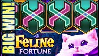 •NEW SLOT! BIG WIN MEOW!! • FORTUNE LINK - FELINE FORTUNE Slot Machine Bonus (IGT)