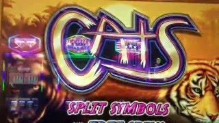 Cats - Big Win - Max Bet Slot Machine Bonus