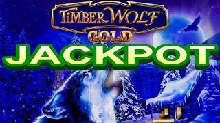 ⋆ Slots ⋆JACKPOT ! WOLVES HOWLING !⋆ Slots ⋆TIMBER WOLF GOLD Slot (Aristocrat)⋆ Slots ⋆$3.60 Bet⋆ Sl