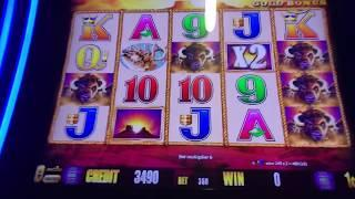 Live from Pechanga Buffalo Gold Slot Machine 4 Coin Trigger Bonus