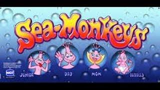 TBT 5c Denom IGT Sea Monkeys slot machine bonus