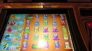 Goldfish Slot Machine Bonus - Fish Food Bonus-I Don't Suck At Picking Fish Cans!