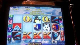 Penguin Pays Slot Bonus - Aristocrat