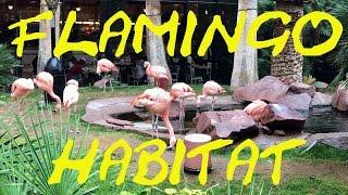"The Flamingo Habitat at ""The Flamingo"" Hotel and Casino in Las Vegas, NV."