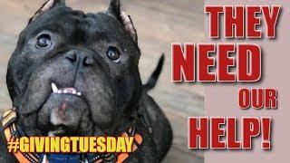 *SPECIAL VIDEO!* They NEED Our Help - #GivingTuesday *Please Watch and SHARE!*