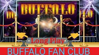 •If you are a fan of BUFFALO  this is your video, do not miss it. Long Play•