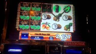Luau Loot Slot Bonus - WMS