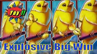 ⋆ Slots ⋆EXPLOSIVE BIG WIN ! !⋆ Slots ⋆SWEET TWEET (DROP & LOCK) Slot (SG) ⋆ Slots ⋆$5.00 & $2.50 Be