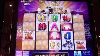Aristocrat Buffalo Slot Win- Parx Casino, Bensalem, PA