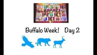 Day 2 of Buffalo Week! Buffalo Gold vs. Buffalo Grand