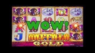 •Buffalo Gold Slot Machine Wins•Live Play/Slot Play•