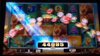 RAGING RHINO Slot machine BIG RHINO WIN Bonus!