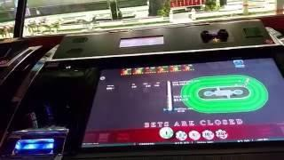 Royal Derby Horse Racing New Slot Machine