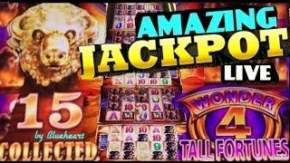 •TALL FORTUNES JACKPOT!• BUFFALO GOLD slot machine JACKPOT HANDPAY! (Wonder 4)