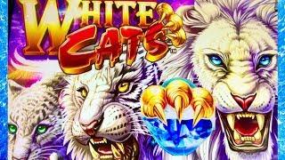 WHITE CATS•CRAZY LINE HITS $$$ CASINO GAMBLING WITH THE BOYZ!