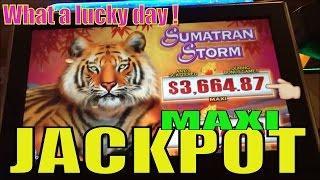 •UNBELIEVABLE MAXI JACKPOT! HANDPAY !•Sumatran Storm Slot machine (igt)•Wild Animals Day /$2.50 Bet