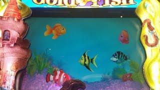 LIVE PLAY WMS Goldfish - $40, MAX BET- FISH FOOD BONUS - GOOD WIN!