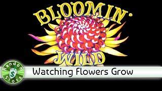 Bloomin' Wilds slot machine, Encore Bonus with Retrigger