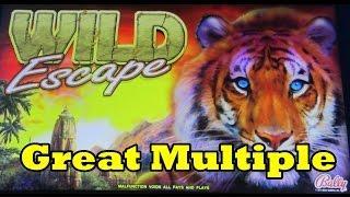 Bally - Wild Escape - Great Hit! 2-cent Denomination!