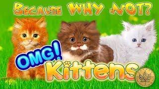 OMG! KITTENS - MAX BET - SHORT AND SWEET- Slot Machine Bonus