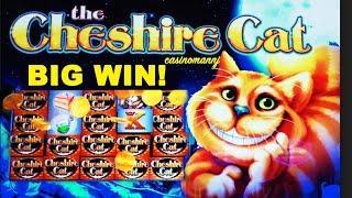 Big Win Cat - Mobil6000