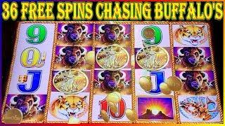 •  CHASING THE BUFFALO HEADS 36 Free Spins •  BUFFALO GOLD COIN SHOW •  Slot Machine Pokies •