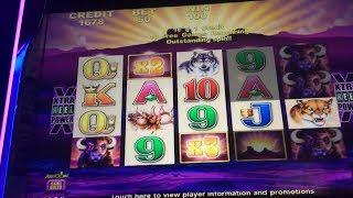 Buffalo & Buffalo Gold Wonder 4 Slot Machine Bonuses - 3 Multipliers!!