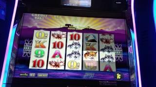 Aristocrat Buffalo Kenny Style Nice Free Spin bonus