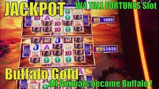•JACKPOT ! HANDPAY•Wonder 4 Tall Fortunes BUFFALO GOLD Slot machine •All animals became Buffalooo!•彡