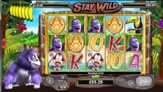 Gorilla Go Wild - Stay Wild - Bonus Round - Nextgen