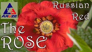 THE ROSE RUSSIAN RED - ARUZE - Slot Machine Bonus