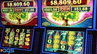 Fa Cai Shu Slot Machines: Eastern Dragon & Spring Lion