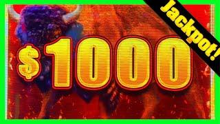 MASSSIVE WINS On New Buffalo Link! JACKPOT HAND PAY! (Buffalo Link, Griffin's Throne Grand and More)