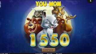 Netent new slot Wolf Cub Dunover get features...