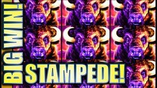 •MASSIVE BIG WIN!! STAMPEDE!• MY BIGGEST HIT ON BUFFALO (ORIGINAL) Slot Machine (Aristocrat)