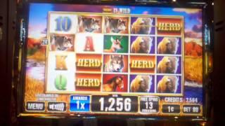 Money rain slot machine online