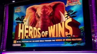 HUGE WINS!!!! Christmas With Herds Of Wins Slot (5 videos)